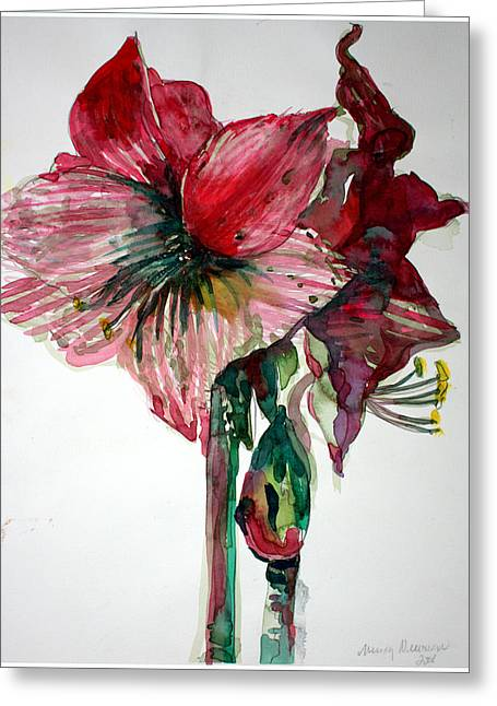 Amaryllis Greeting Card
