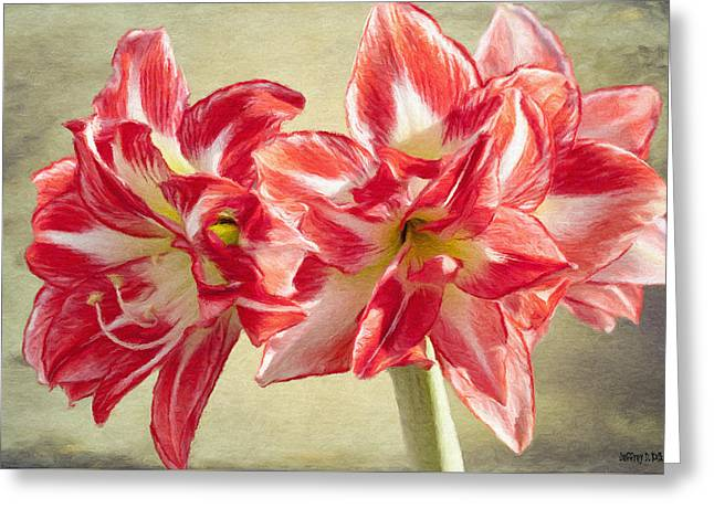 Amaryllis Red Greeting Card by Jeff Kolker