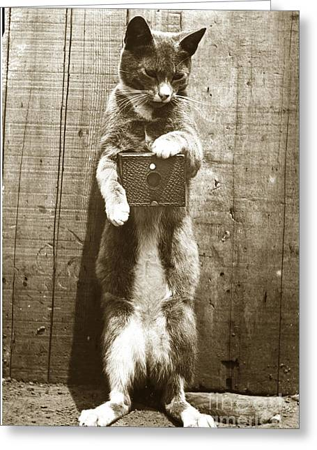 Greeting Card featuring the photograph Amateur Feline Fotografer Cat With A Box Camera  Historical Photo 1900 by California Views Mr Pat Hathaway Archives