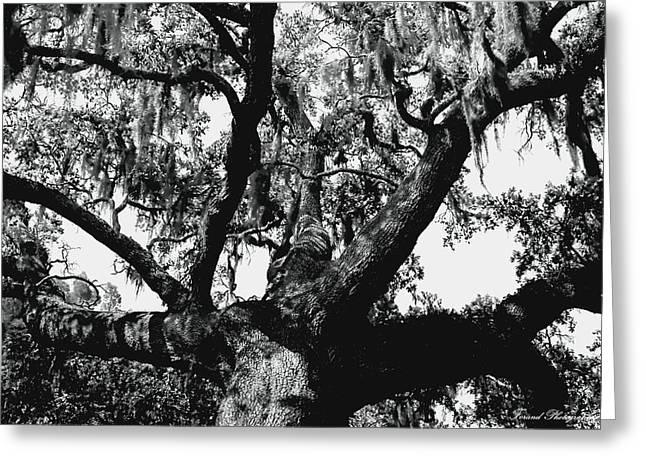 Amazing Oak Tree Greeting Card