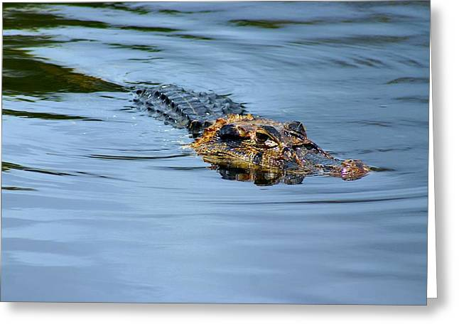 Greeting Card featuring the photograph Amazon Alligator by Henry Kowalski