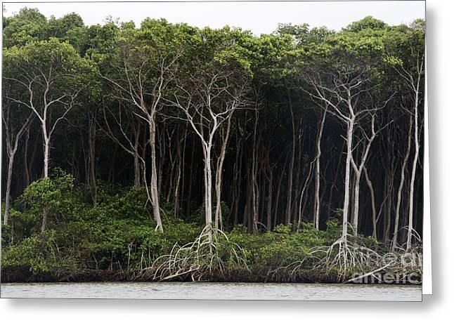 Amazon Rain Forest Brazil Greeting Card by Bob Christopher