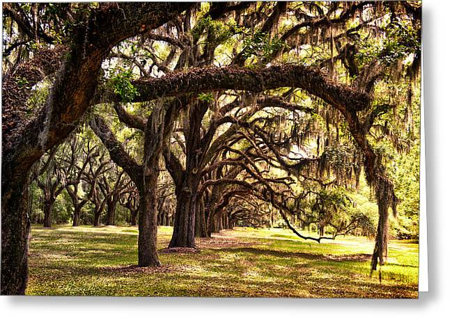 Amber Archway Greeting Card by Renee Sullivan