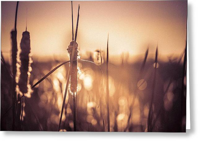 Greeting Card featuring the photograph Amber Glow by Jason Naudi Photography