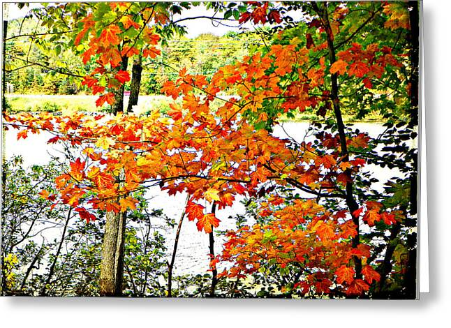 Amber Leaves  Greeting Card by Dianne  Lacourciere