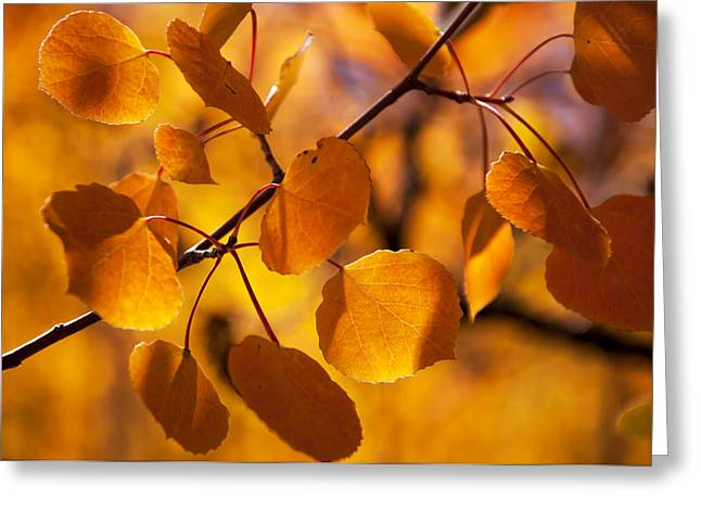 Amber Leaves Greeting Card by The Forests Edge Photography - Diane Sandoval