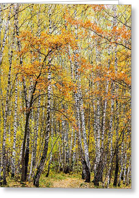 Amber Season - Featured 3 Greeting Card by Alexander Senin