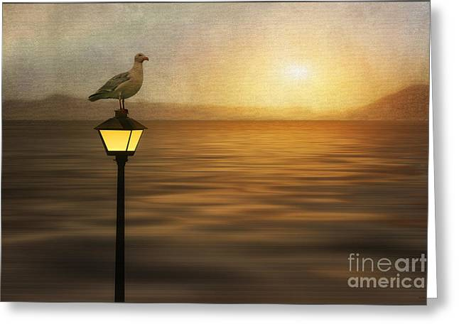 Amber Sunset Greeting Card by Tom York Images