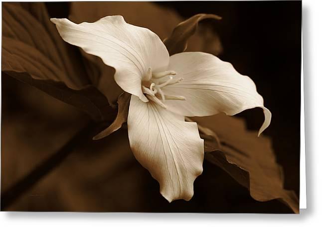 Amber Trillium Wild Flower Greeting Card by Jennie Marie Schell
