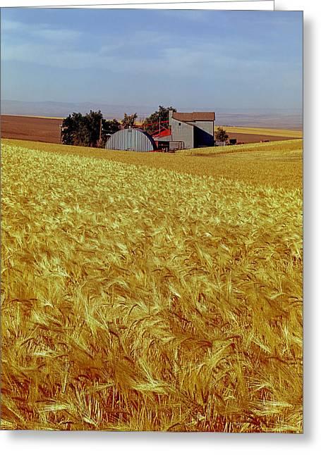 Amber Waves Of Grain - V Greeting Card