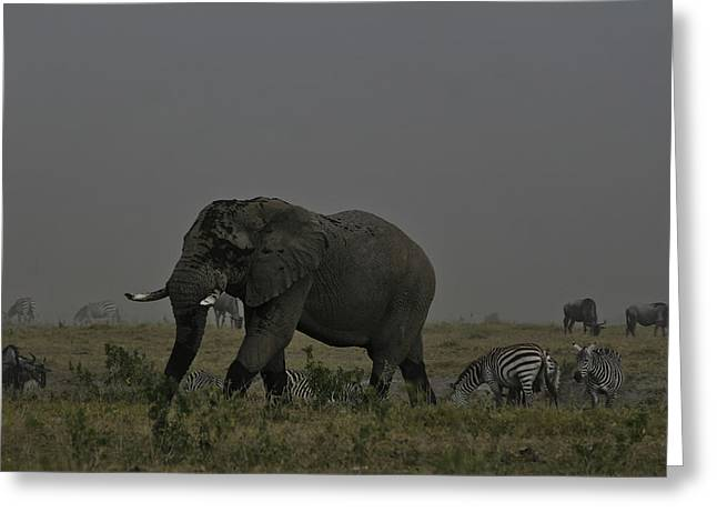 Greeting Card featuring the photograph Amboseli Giant by Gary Hall