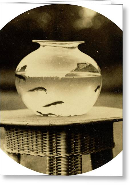 American 19th Century, Untitled Fishbowl Greeting Card by Litz Collection