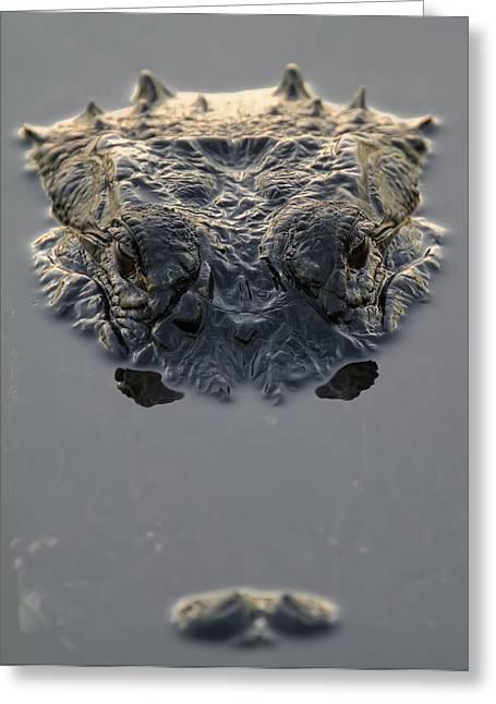 American Alligator Everglades National Greeting Card by Robert Postma