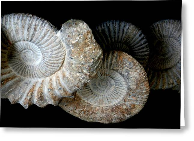 American Ammonites - Prehistoric Greeting Card by Tray Mead