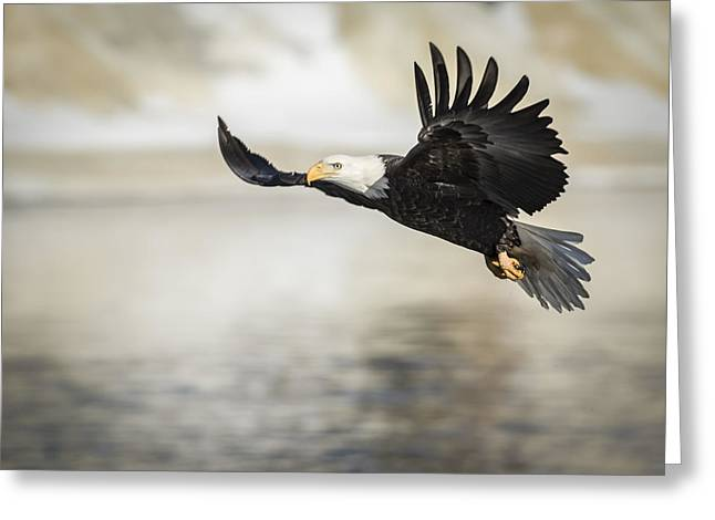 American Bald Eagle 2015-22 Greeting Card