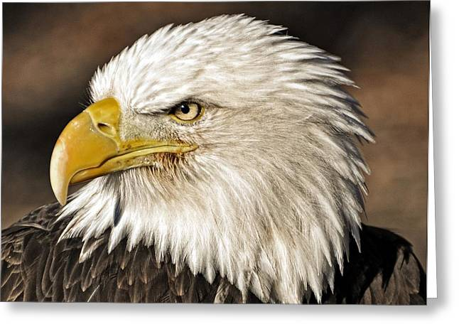 American Bald Eagle 33 Greeting Card by Marty Koch