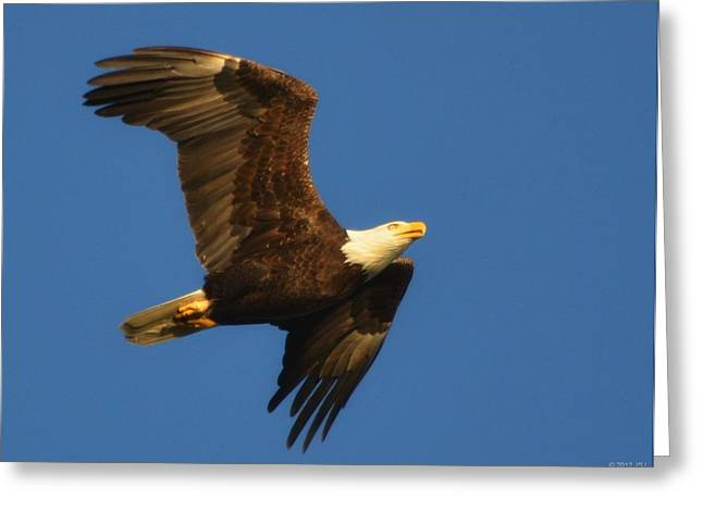 Greeting Card featuring the photograph American Bald Eagle Close-ups Over Santa Rosa Sound With Blue Skies by Jeff at JSJ Photography