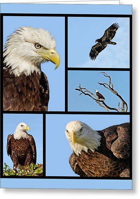American Bald Eagle Collage Greeting Card