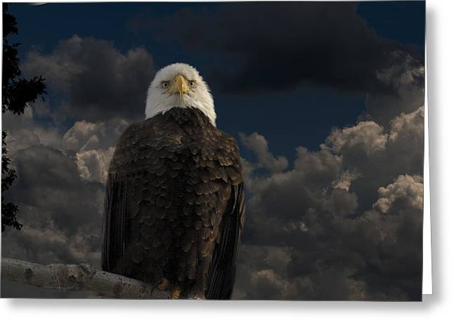 American Bald Eagle Composite Greeting Card by Thomas Young