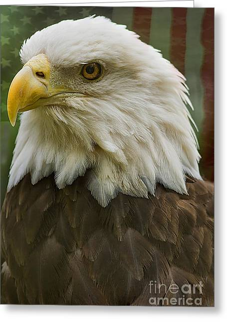 American Bald Eagle With American Flag Background Greeting Card by Anne Rodkin