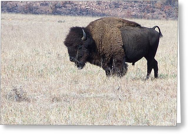Greeting Card featuring the photograph American Bison by Alan Lakin