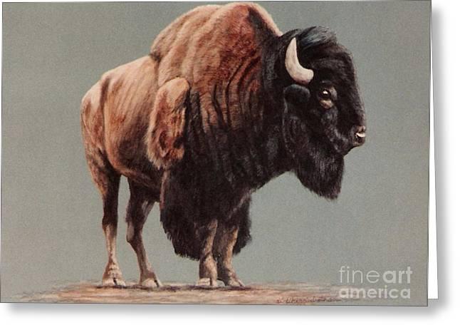 American Bison Greeting Card by DiDi Higginbotham