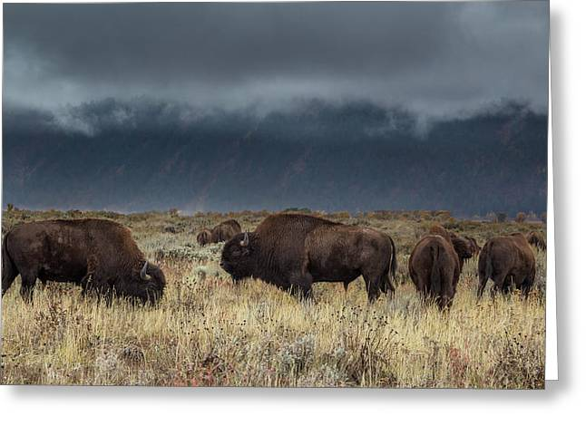 American Bison On The Prairie Greeting Card