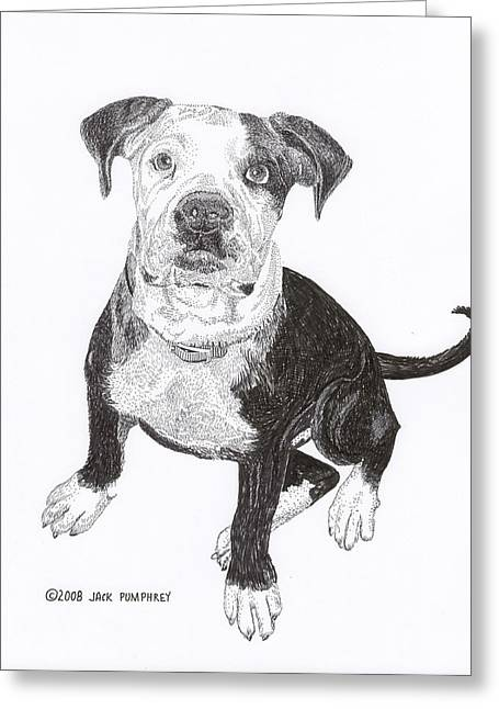 Pen And Ink Framed Prints Greeting Cards - American Bull Dog as a PUP Greeting Card by Jack Pumphrey