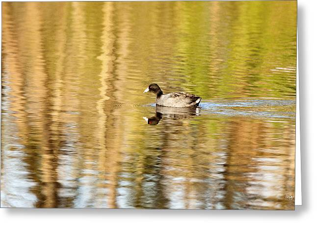 American Coot Greeting Card by Scott Pellegrin