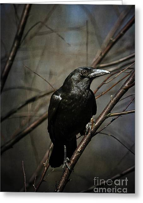 American Crow Greeting Card by Lois Bryan