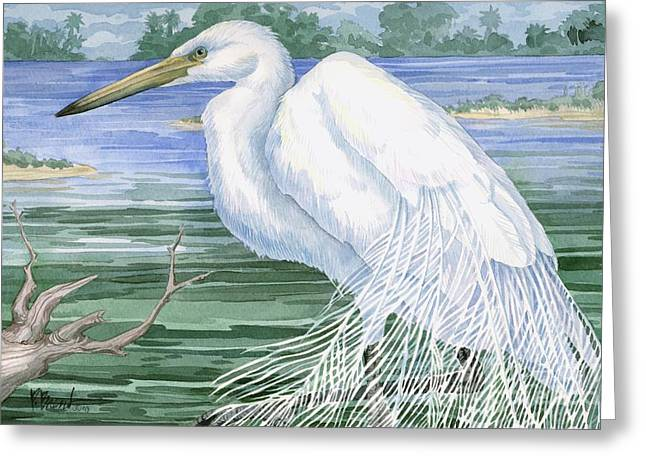 American Egret Greeting Card by Paul Brent