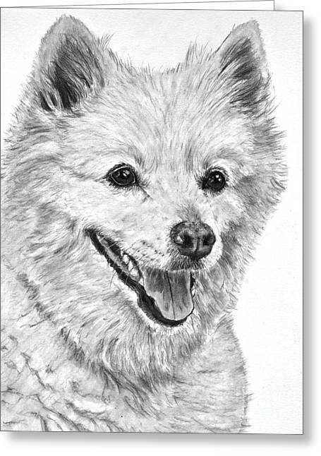 American Eskimo Charcoal Drawing Greeting Card by Kate Sumners