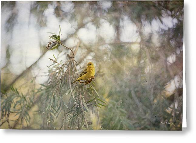 American Goldfinch In Winter Plumage Greeting Card by Angela A Stanton