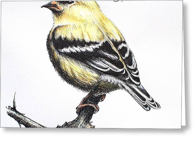 American Goldfinch Greeting Card by Katharina Filus