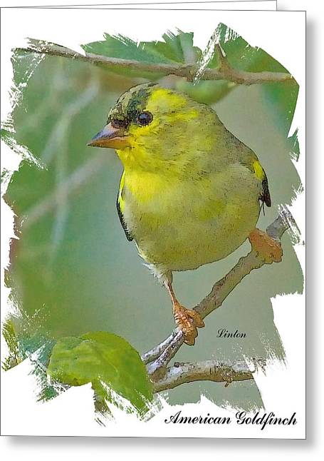 American Goldfinch Greeting Card by Larry Linton