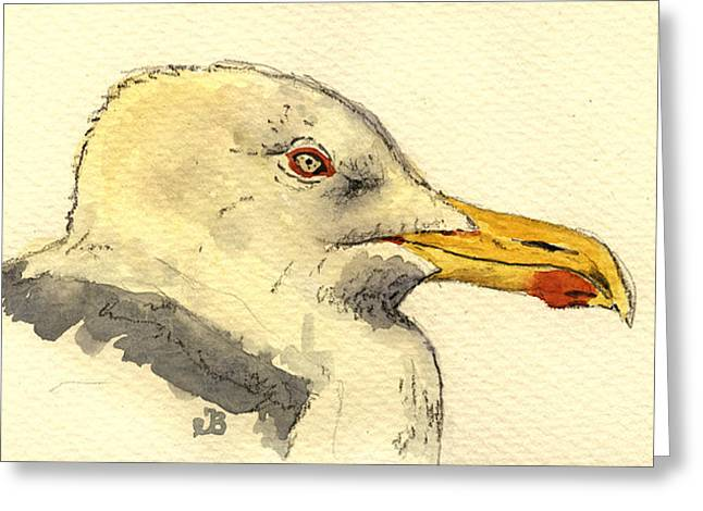 American Herring Gull Greeting Card by Juan  Bosco