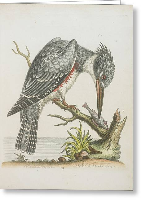 American Kingfisher Greeting Card by British Library