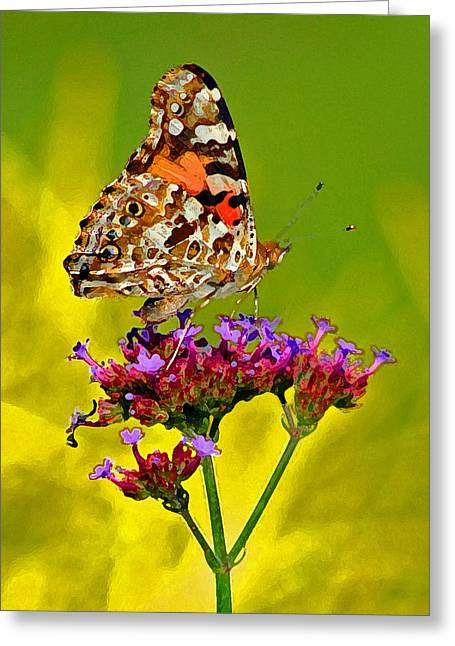 American Painted Lady Butterfly Greeting Card by Karen Adams