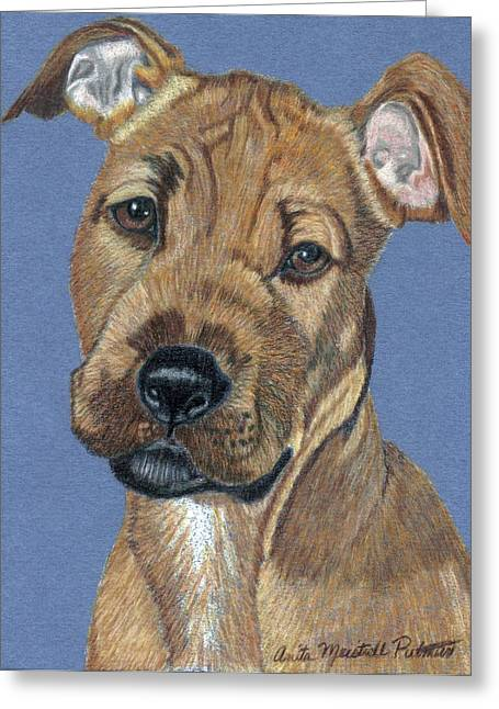 American Pit Bull Terrier Puppy Greeting Card by Anita Putman