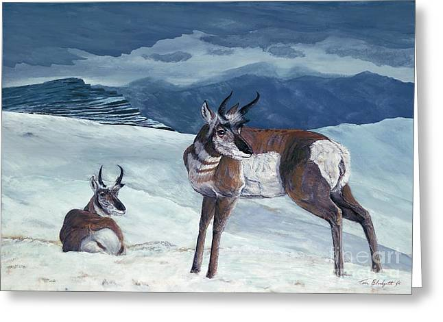 American Pronghorn Greeting Card by Tom Blodgett Jr