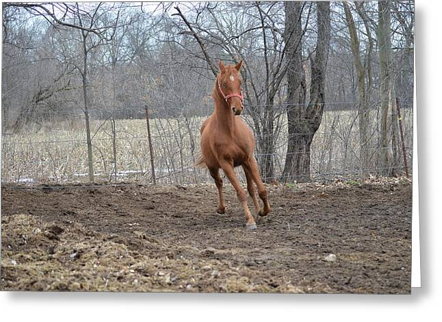 American Saddlebred Greeting Card by Jennifer  King