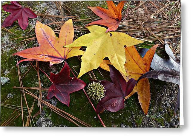 Greeting Card featuring the photograph American Sweetgum Autumn Display by William Tanneberger