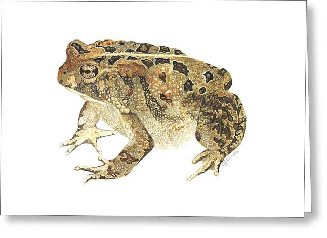 American Toad Greeting Card by Cindy Hitchcock
