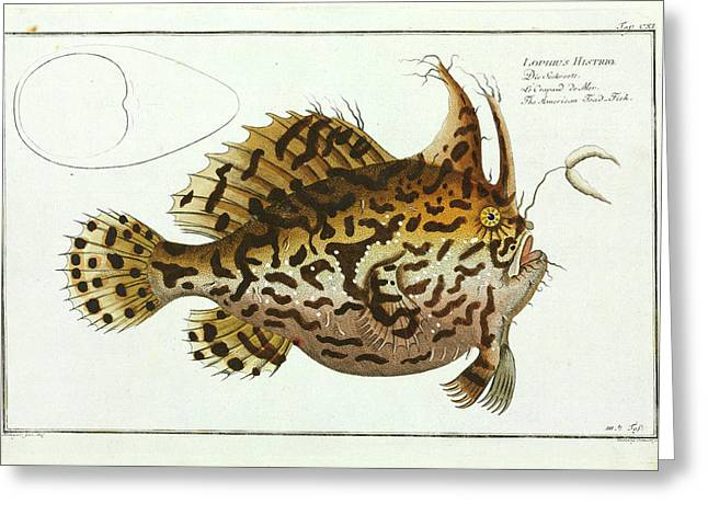 American Toad-fish Greeting Card by Natural History Museum, London