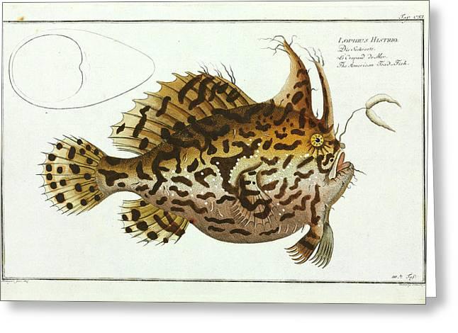 American Toad-fish Greeting Card