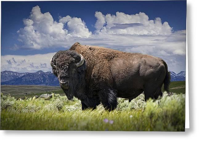 American Western Buffalo Greeting Card