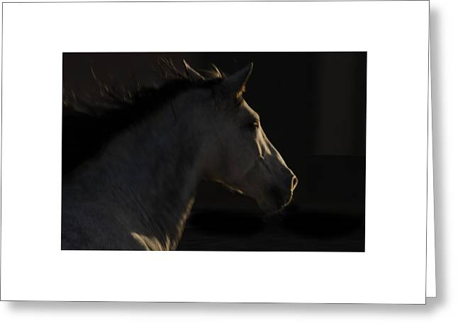 Greeting Card featuring the photograph Americano 18 by Catherine Sobredo