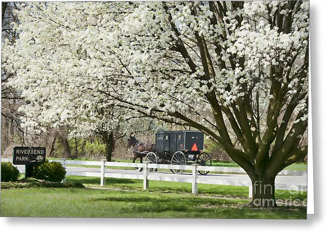 Amish Buggy Fowering Tree Greeting Card