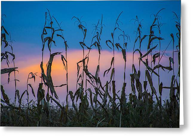 Amish End Of Harvest Greeting Card by Bruce Neumann
