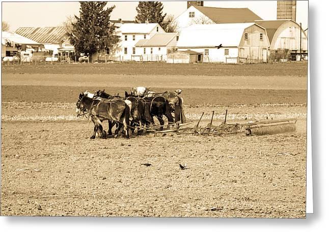 Amish Farm Greeting Card by Menachem Ganon